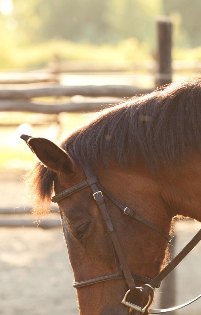 At Biniciliği Kastamonu