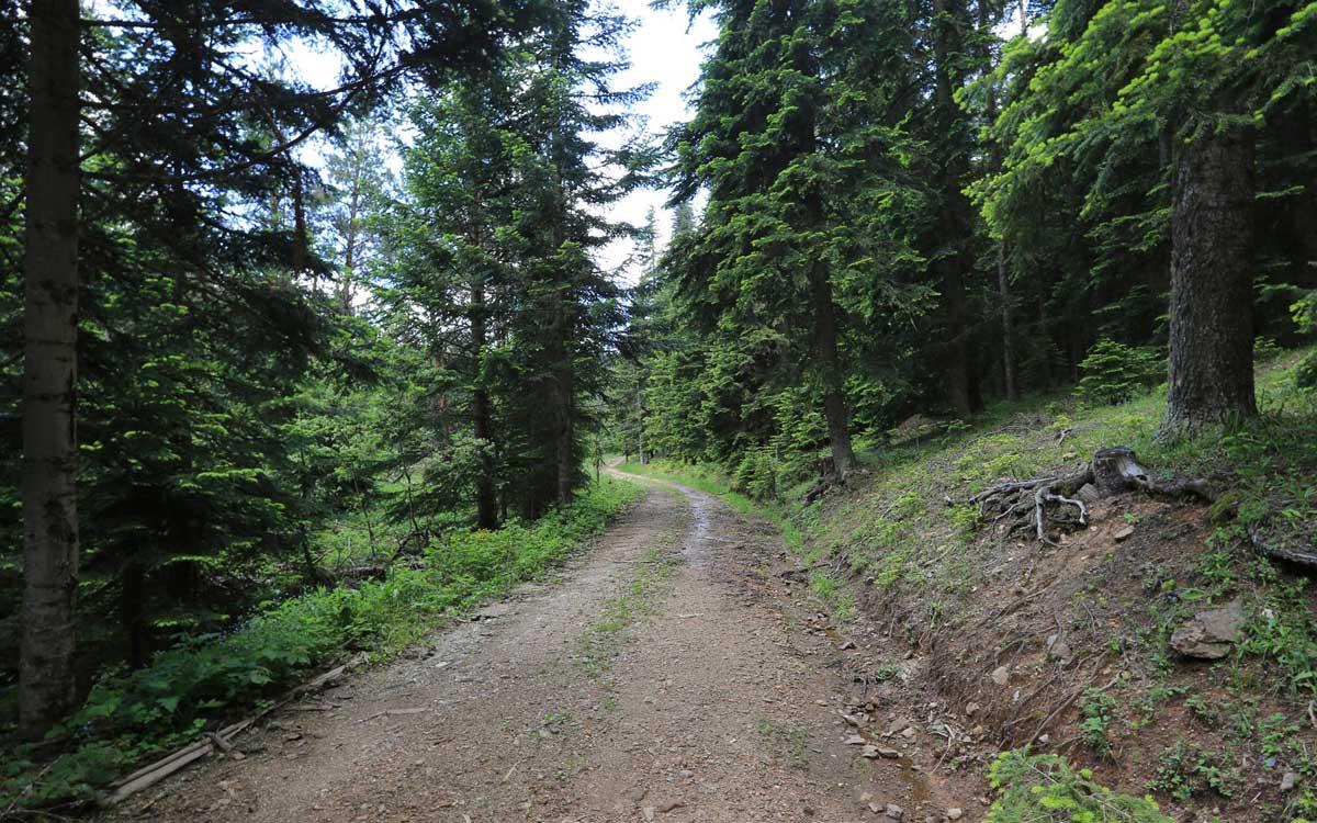 Soğucaova Orman Yolu Kastamonu