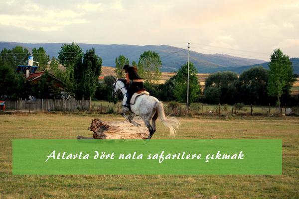 Çocuklar için bambaşka bir eğlence: ponyler ile kızak sürme