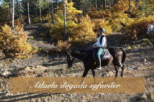 Atlarla dogada safariler