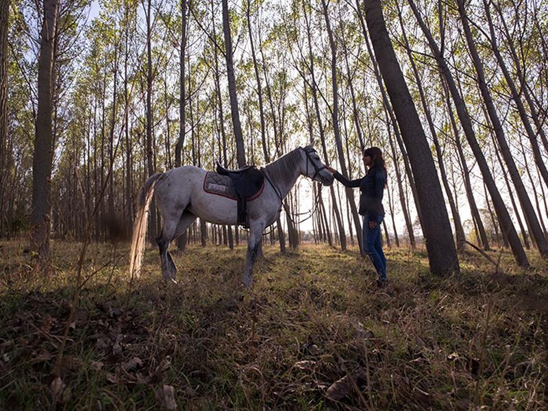 At Biniciliği ve Serbest Sürüş