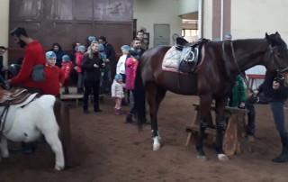 At Tımarı Nasıl Yapılır ? Atlar Hakkında Bilgiler