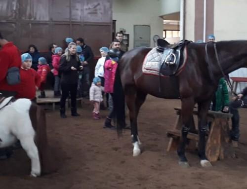 Tımar Nasıl Yapılır? At Nasıl Tımarlanır? At Bakımı, Tımar Malzemeleri