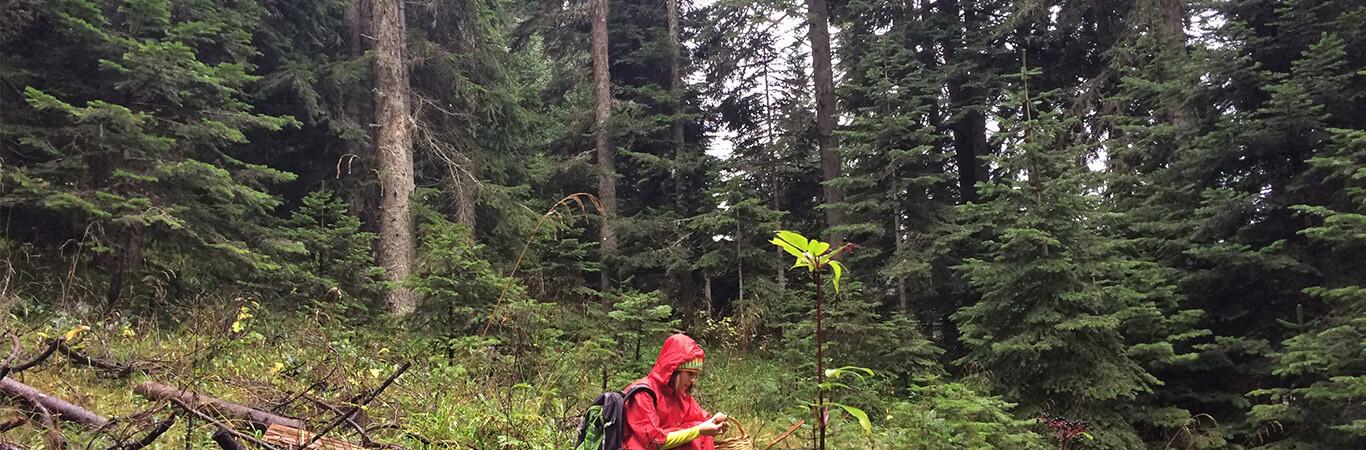 Ballıdağ Daday Ormanları