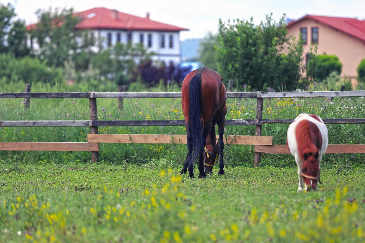 Kastamonu At Çiftliği