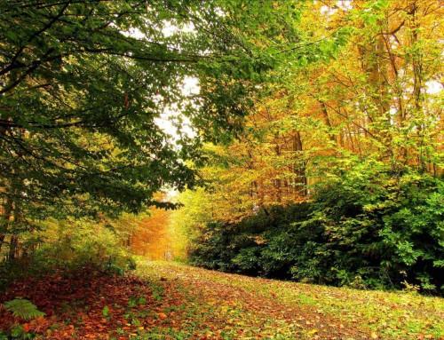 Alışılmış Tatil Rotalarından Gizli Cennet'e Yolculuk