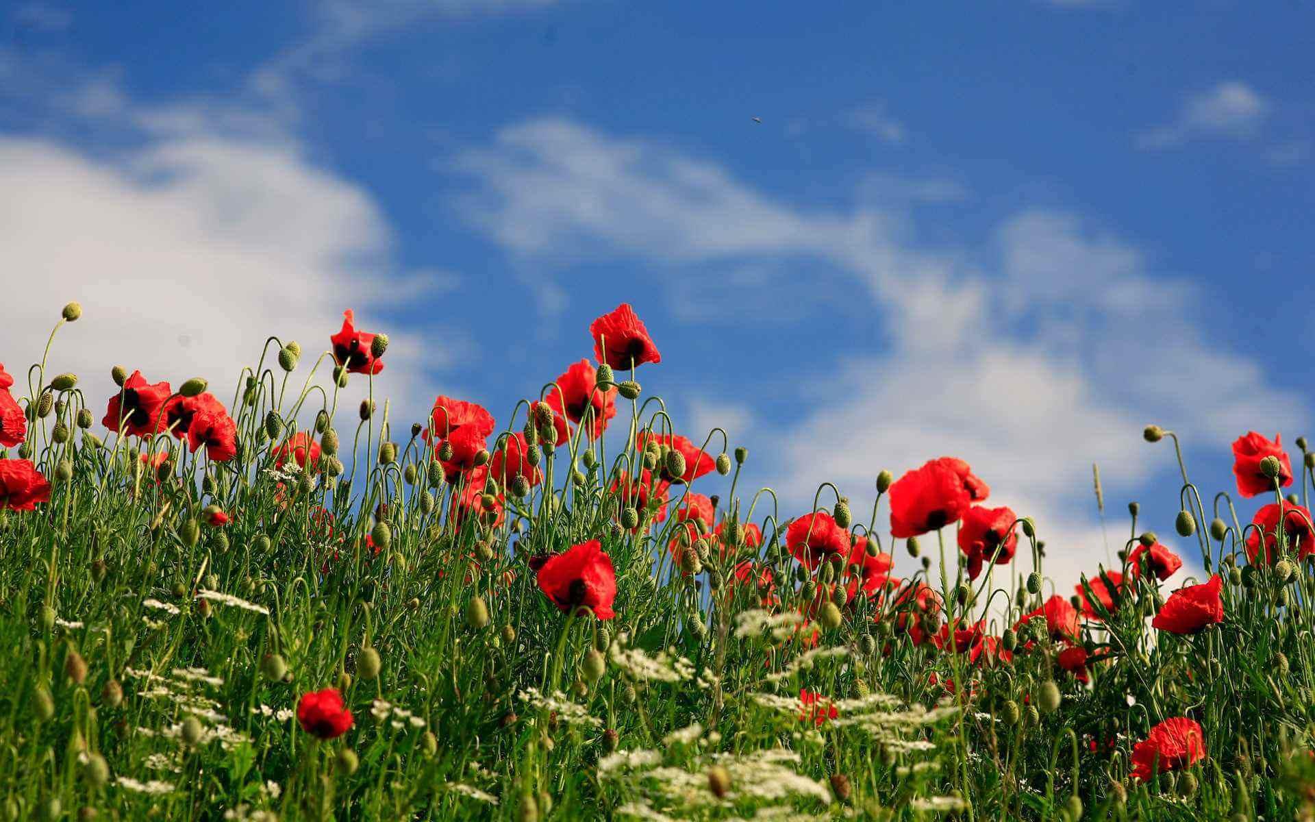 İlkbaharda Açan Çiçekler Kastamonu İksir Resort Town Daday