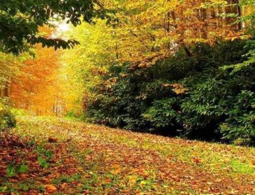 Sonbaharın Renklerini Yakalamaya Hazır mısınız?