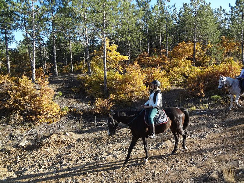 At Biniciliği ve Serbest Sürüş Eğitimleri
