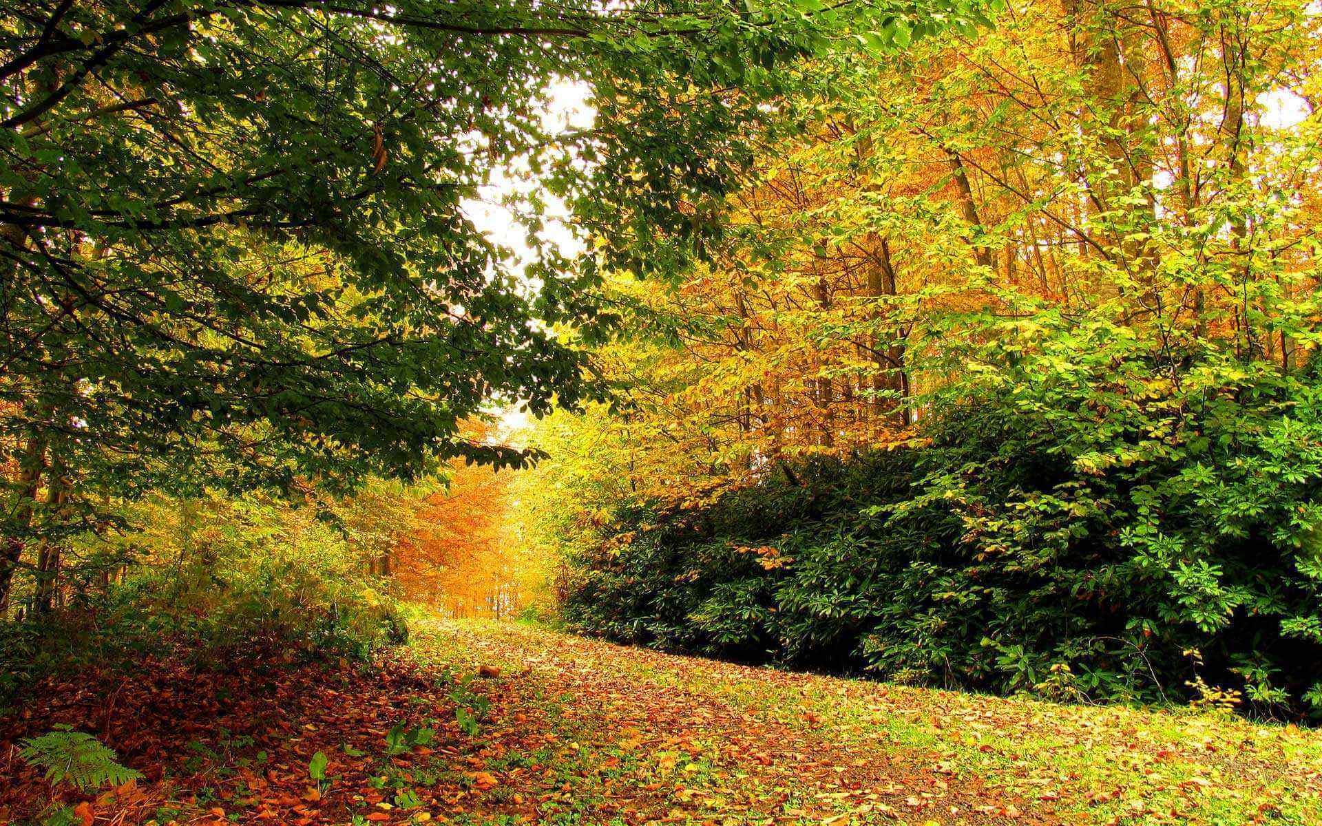 Sonbaharda Daday Ormanları