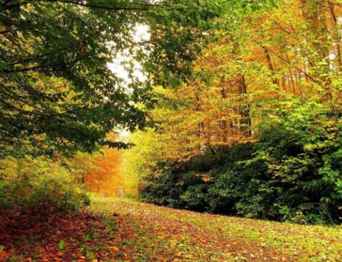 Sonbahar Fotoğrafçılığı, Bisiklet Turları ve Bisiklet Rotaları